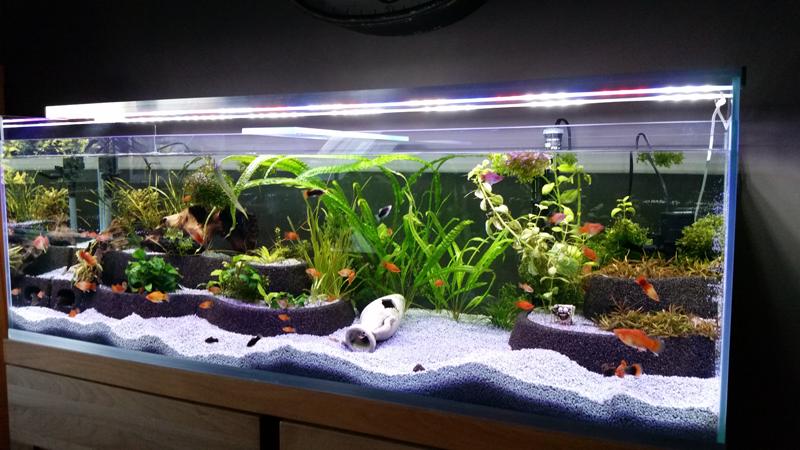 3d Fischwelten Machen Sie Ihr Aquarium 3 Dimensional